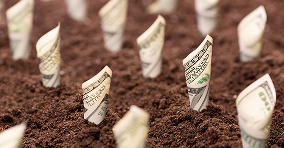 """rolled hundred dollar bills """"growing: out of soil"""
